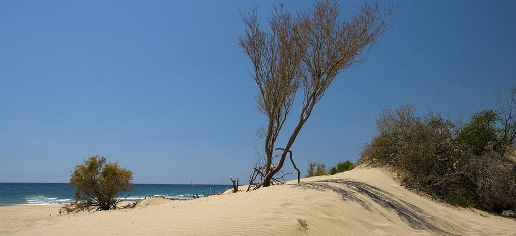 Sand Dunes on Patara Beach