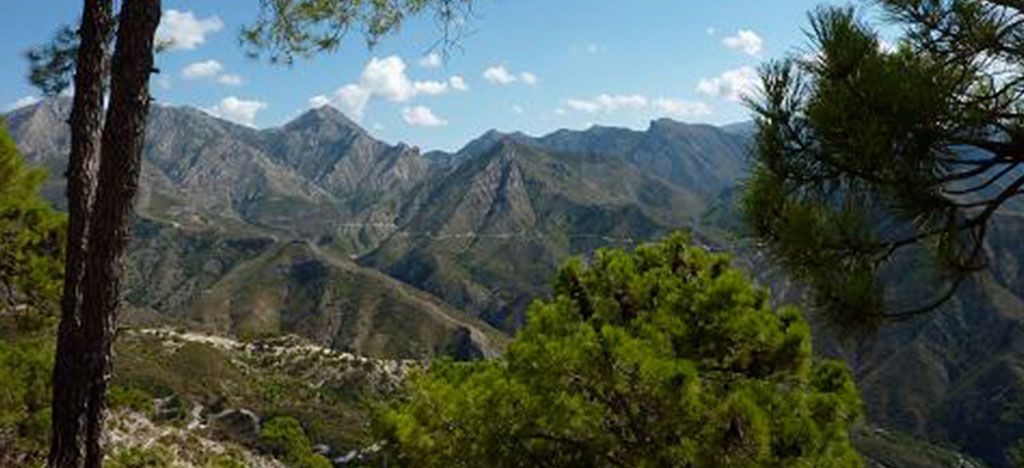 View through trees of mountain in Frigiliana